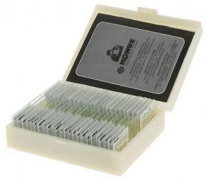 микроскопски препарати - човешки тъкани I серия