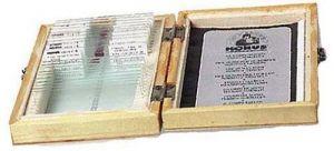microscope slide - ANGIOSPERMAE, DICOTYLEDONS (MAGNOLIOPSIDAE) (25 SLIDES)